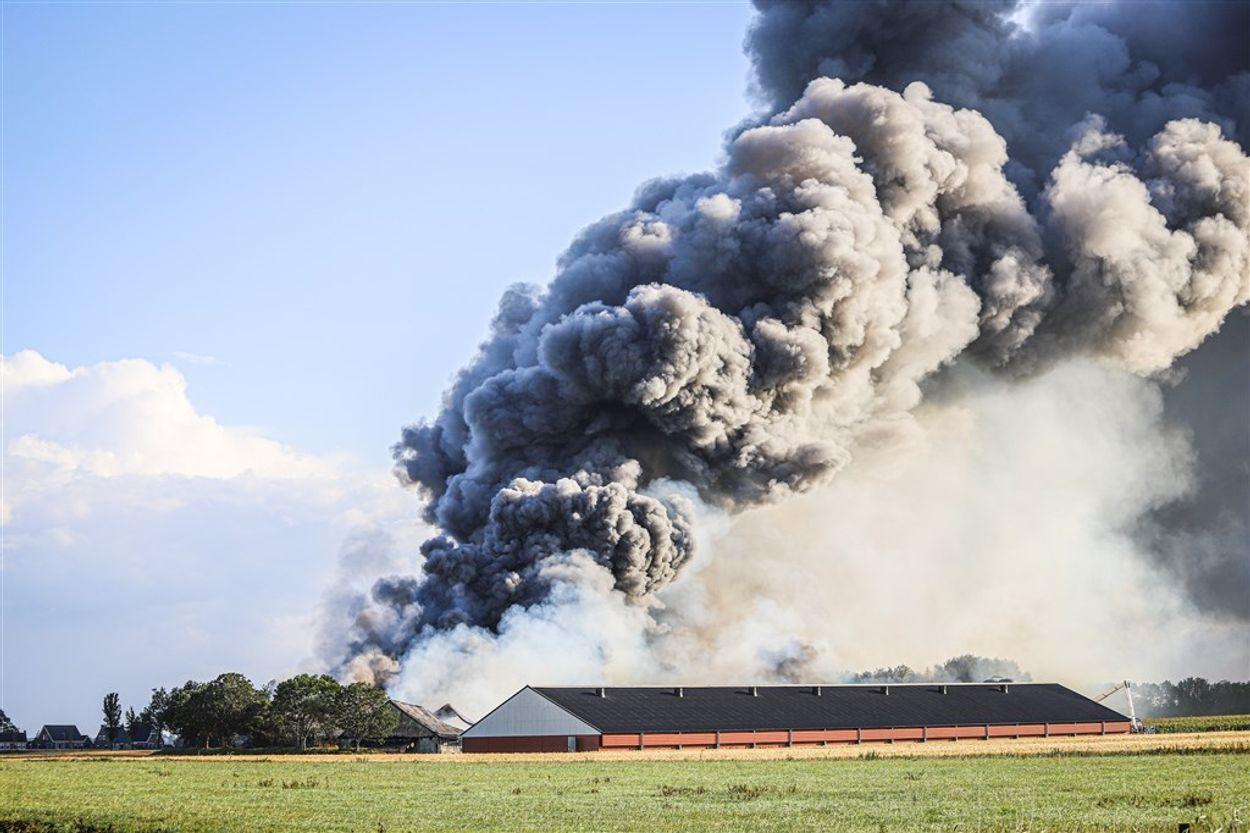 stalbrand niawier Friesland ANP