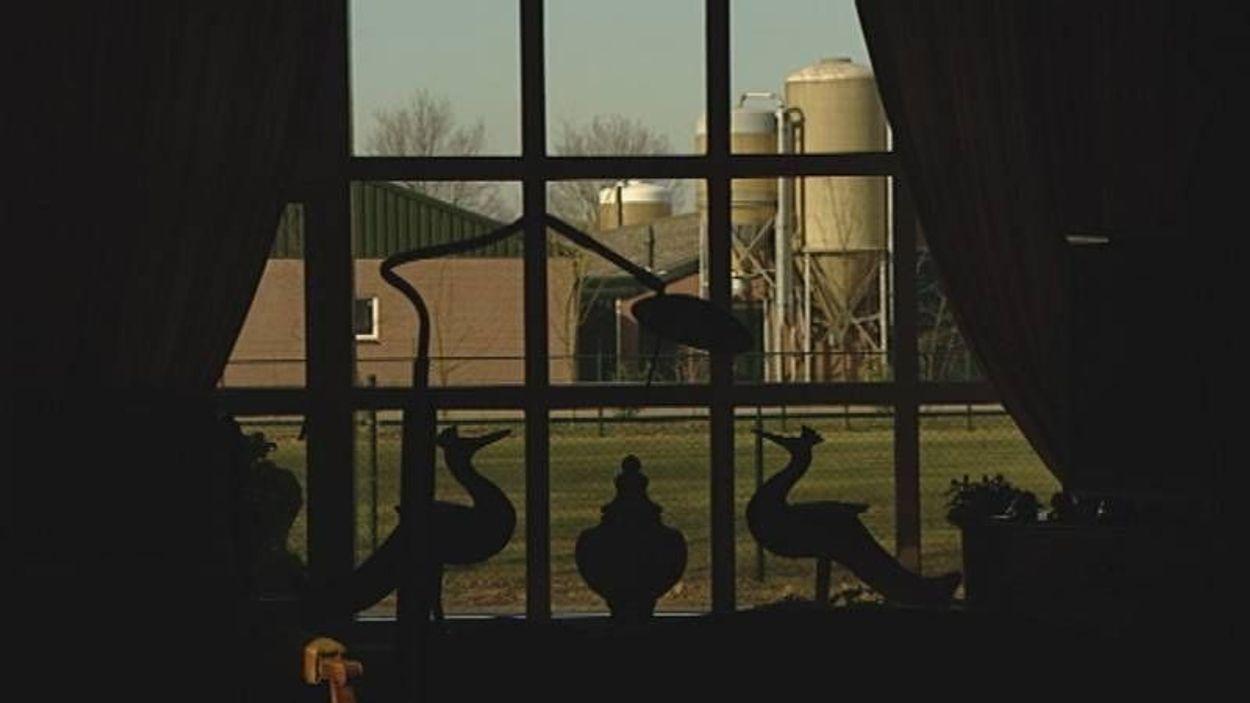 Afbeelding van Varkensboeren slepen Brabant voor de rechter