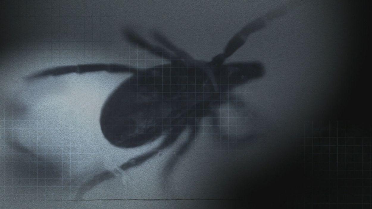 Afbeelding van Undercover in de Duitse Lyme-kliniek