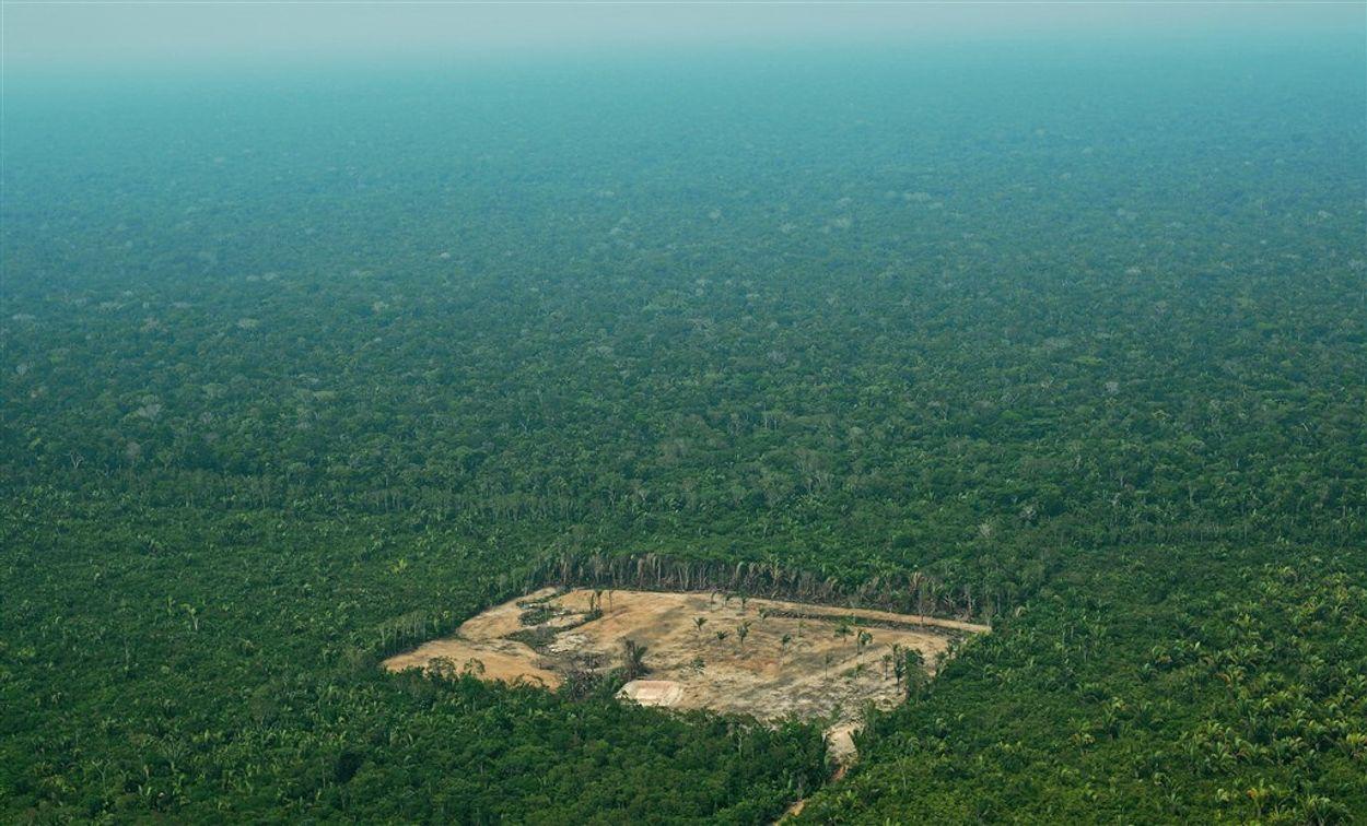 Afbeelding van Weer twee stamleiders vermoord in Amazonegebied