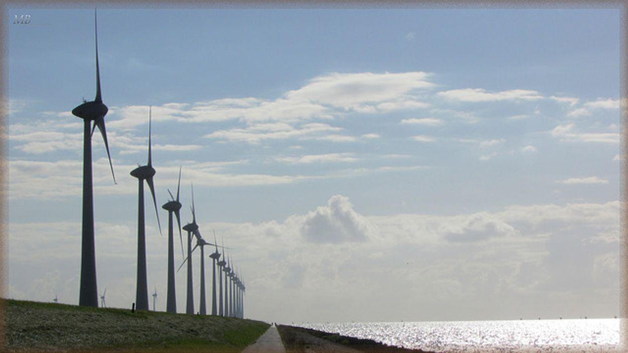 Afbeelding van Nederland moet door de pijn heen voor groene economie
