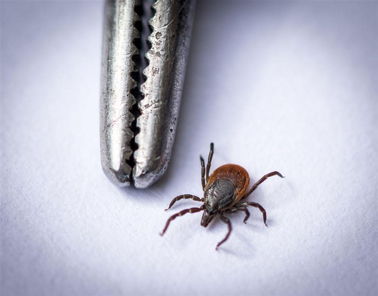 Afbeelding van Deskundigen waarschuwen Nederlanders voor Duitse Lyme-klinieken