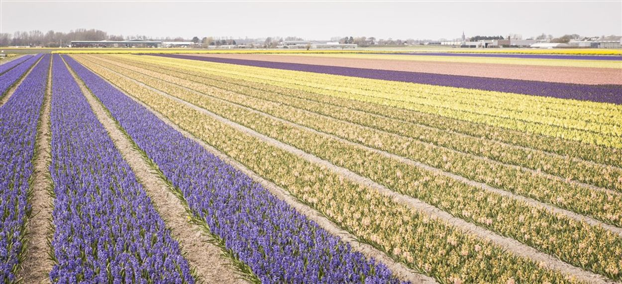 Afbeelding van Drentse bewoners onderzoeken landbouwgif in bodem en water en vinden 57 middelen