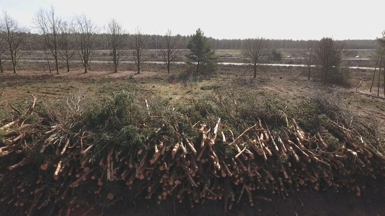 Afbeelding van Na jaren voorbereiding lijkt biomassacentrale van de baan