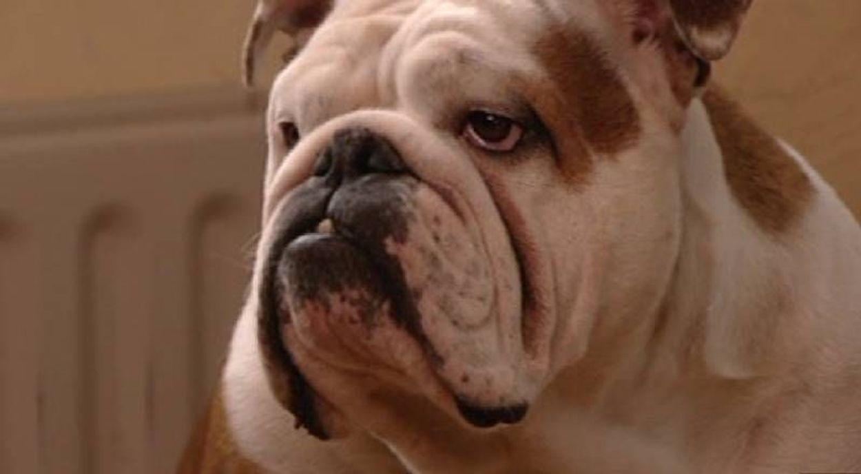 Afbeelding van Bleker pakt misstanden in hondenfokkerij aan