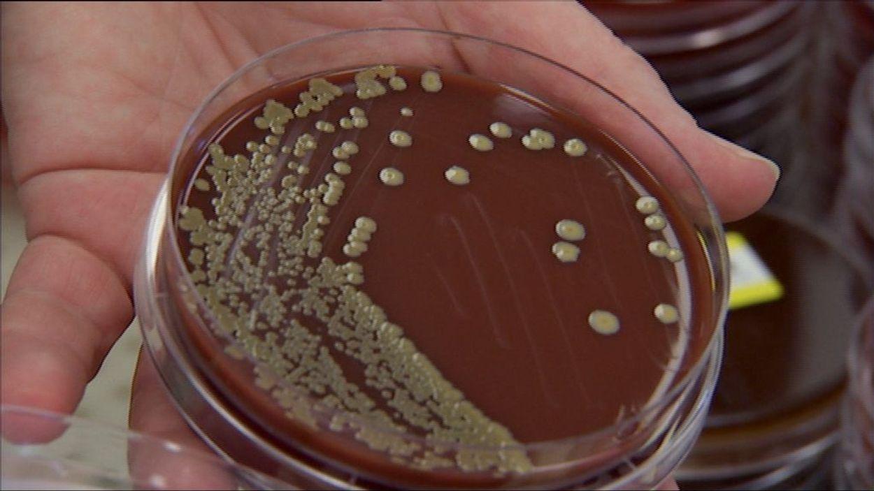 Afbeelding van Antibiotica alarm