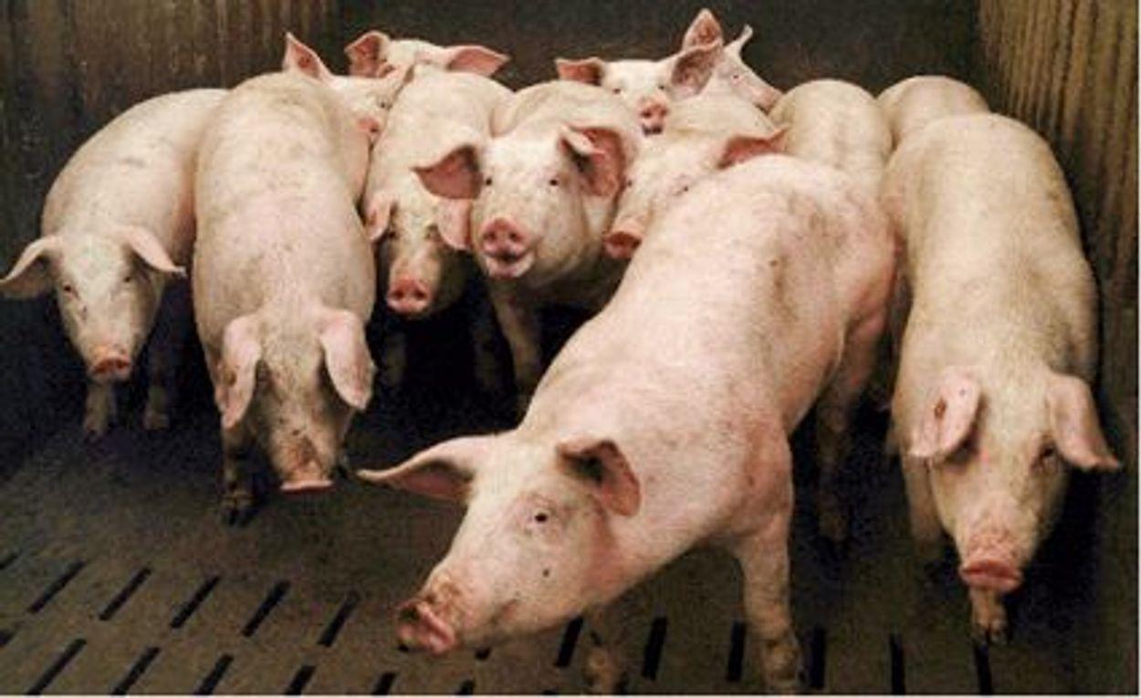 Afbeelding van Farmaceutische industrie dringt aan op gebruik antibiotica