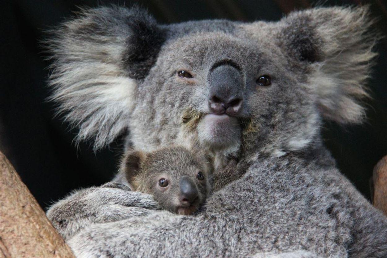 Afbeelding van WNF: dierenpopulaties wereldwijd met zestig procent afgenomen door toedoen van mensen