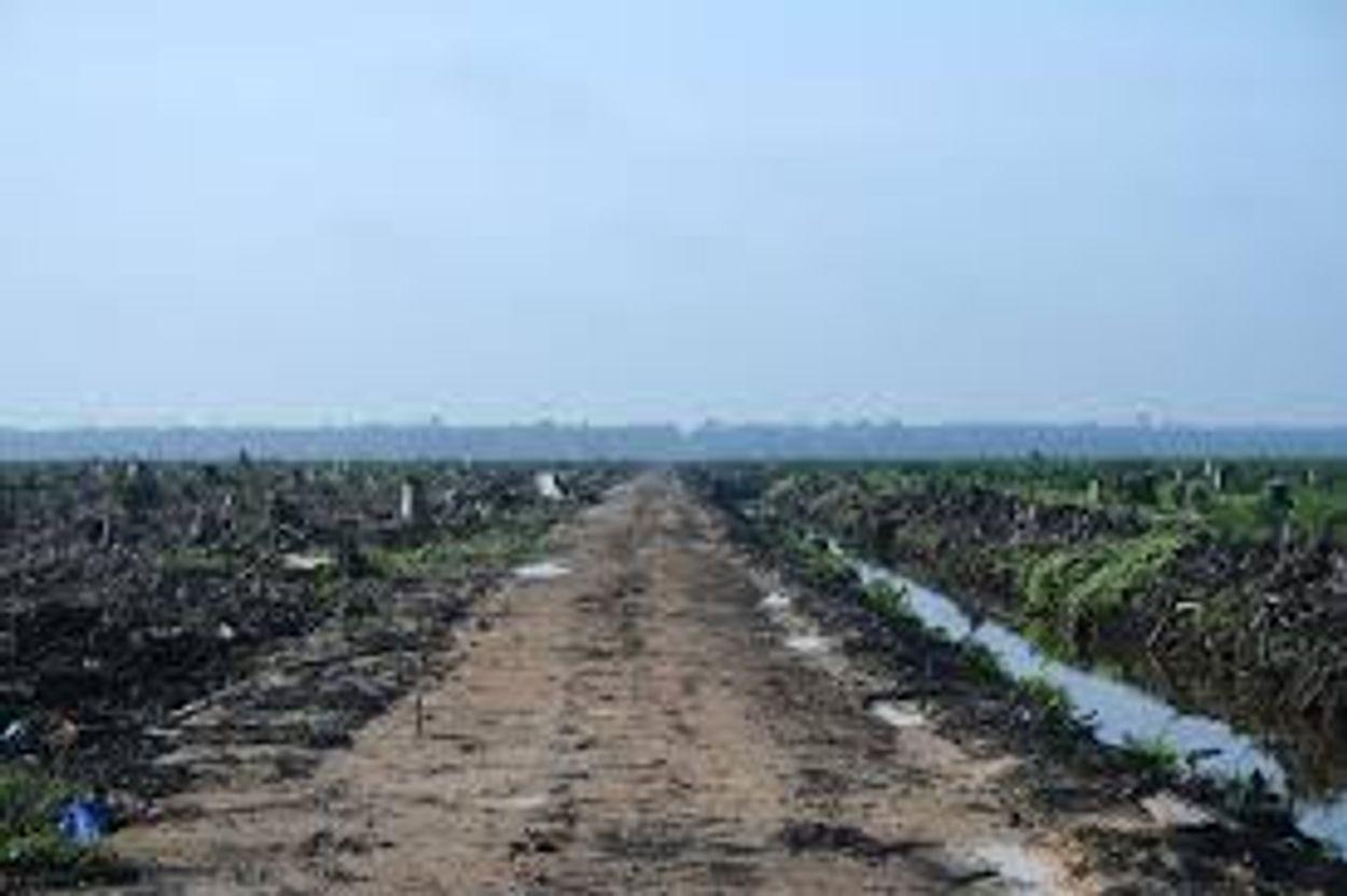 Afbeelding van 'Nederland aan kop met duurzame palmolie'