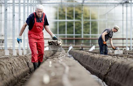Afbeelding van 'Zorgwekkend veel arbeidsongevallen in agrarische sector'