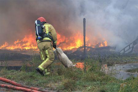 Afbeelding van Duizenden biggen dood door stalbrand in Heusden