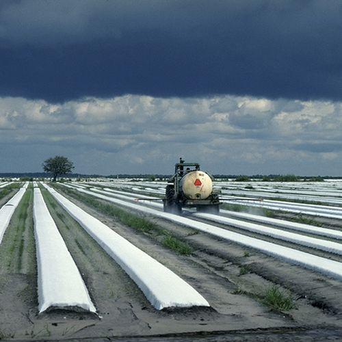 Afbeelding van Vijf vragen over omstreden pesticide chloorpyrifos dat verboden dreigt te worden