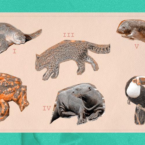 Afbeelding van Honderden diersoorten in Amazone met uitsterven bedreigd