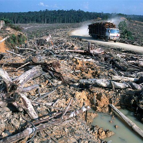 Afbeelding van VN over uitputting aarde: dit is er nodig om het tij te keren