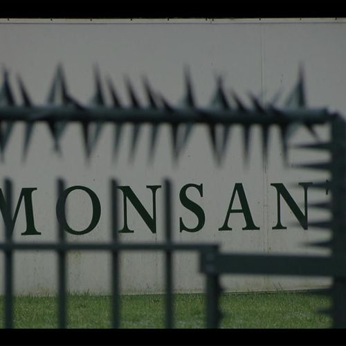 Afbeelding van Monsanto schikt voor 39,5 miljoen dollar in zaak om valse advertentieclaim