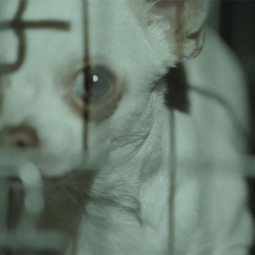 Afbeelding van Strengere regels tegen foute puppyhandel