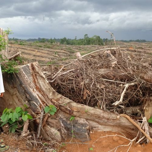 Afbeelding van Grote Nederlandse banken financieren ontbossing en landroof