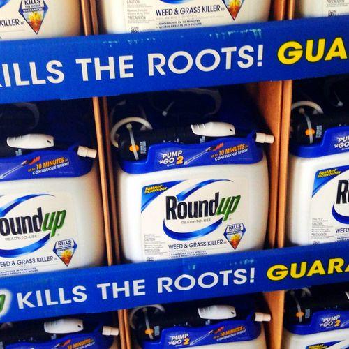 Afbeelding van 'Monsanto betrokken bij intrekken geruchtmakende studie over Roundup'