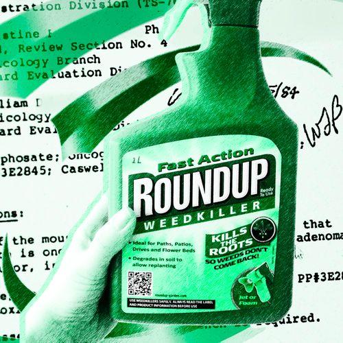 Afbeelding van De macht van Monsanto