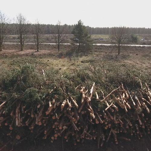 Afbeelding van 'Nederland een van 's werelds grootste importeurs houtpellets'