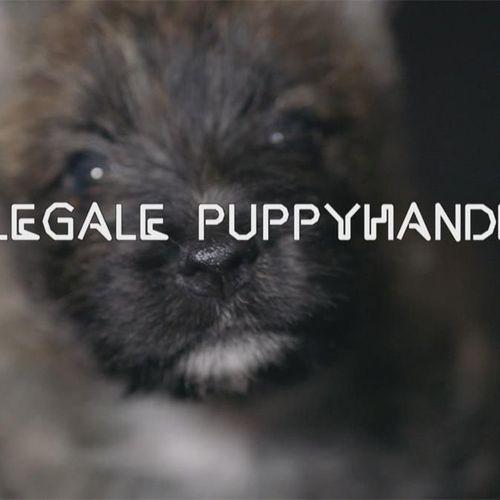 Afbeelding van Kamer wil dierenpaspoort voor puppy's