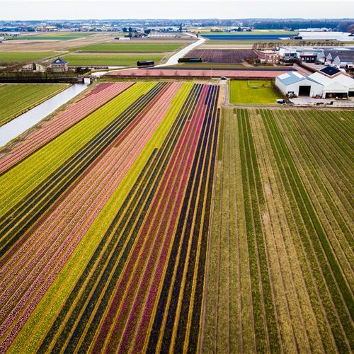 Afbeelding van Local Residents of Bulb Fields in The Netherlands Suffer Greater Exposure to Pesticides